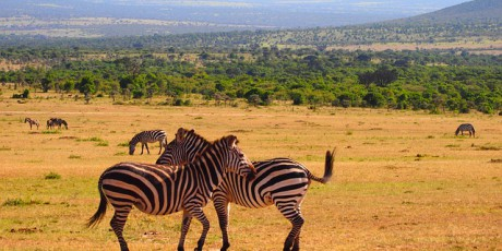 Backpacking in Afrika: Von Kapstadt bis Nairobi